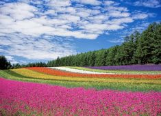 Glorious Enjoy Life With Your Own Flower Garden Beautiful Easy Ideas. Enjoy Life With Your Own Flower Garden Beautiful Easy Ideas. Beautiful Flowers Pictures, Flower Pictures, Rainbow Flowers, Orange Flowers, Colorful Flowers, Nature Images, Nature Photos, Landscape Photography, Nature Photography