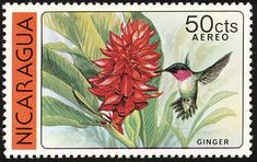 Broad-tailed Hummingbird stamps - mainly images - gallery format