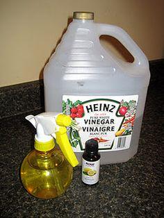 Homemade Air Freshener    http://www.Dreumex.com
