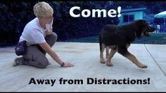 Useful Dog Obedience Training Tips – Dog Training Puppy Training Schedule, Dog Training Books, Basic Dog Training, Training Classes, Training Videos, Clicker Training Puppy, Leash Training, Toilet Training, Training Collar