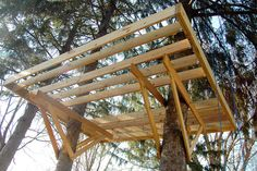 an update on the The World's Most Awesome Treehouse(s)! by snowdeal, via Flickr