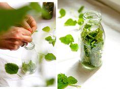 Making lemon balm oil yourself - Heilkräuter und Heilkraft - Beauty Slow Cooker Carnitas, Homemade Pesto, Lemon Balm, Oil Benefits, Infused Water, Preserving Food, Summer Diy, Natural Medicine, Diy Beauty