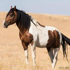 Photo by Kelly Jay Photography https://www.facebook.com/FreeWildHorses/photos/a.119795654746757.17030.117437204982602/776423559083960/?type=1
