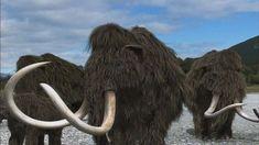 Een mammoet is een soort langharige olifant. Nu is hij uitgestorven, maar 10.000 jaar geleden was hij de koning van de ijstijd.