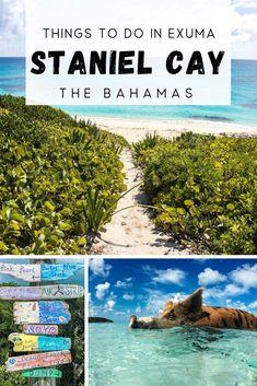 Bahamas Bahamas Honeymoon, Exuma Bahamas, Bahamas Vacation, Vacation Trips, Bahamas Pigs, Bahamas Island, Pig Island, Small Island, Hawaii Travel