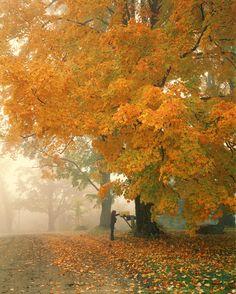 Autumn Morning mist, Cambridge Vermont