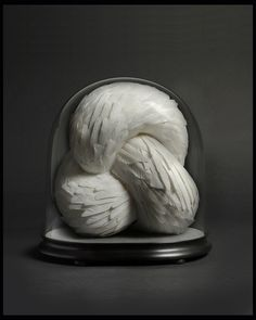 Crave, 2012, Kate MccGwire. Mixed media with white pigeon feathers in antique dome