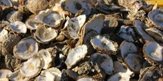 There are 10 current oyster and clam recalls out after the FDA removed all Korean shellfish farms from its list of certified shippers because of unsanitary growing conditions that could lead to norovirus contamination.