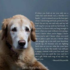 Poem from a Senior Dog. Sweet words and so true. I'm sure that's exactly what my dear Falco could have said if he could talk.