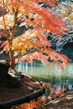 "Shinjuku Gyoen Park, Tokyo, Japan - beautiful pocket park.  ""Zen"" in the city!"