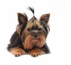 Nemoci přenosné z domácích zvířat na lidi