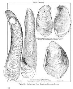 page190.jpg (362×440)