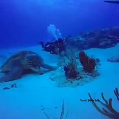 This may be the largest turtle ever recorded on camera - Gigantische Lebewesen - Tiere Beautiful Sea Creatures, Animals Beautiful, Cute Funny Animals, Cute Baby Animals, Nature Animals, Animals And Pets, Ocean Creatures, Ocean Life, Animal Pictures