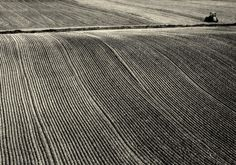 field by halina-anna (flickr) - love the subtle curves and textures