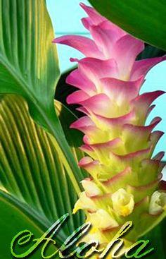 Exotic flowers maui hawaii tropical heliconia flower for Spikes tattoo maui