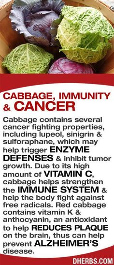 Cabbage contains several cancer fighting properties, including lupeol, sinigrin sulforaphane, which may help trigger enzyme defenses inhibit tumor growth. Due to its high amount of Vitamin C, cabbage helps strengthen the Immune System help the body fight against free radicals. Red cabbage contains vitamin K anthocyanin, an antioxidant to help reduces plaque on the brain, thus can help prevent Alzheimers disease. #dherbs #healthtips http://liverbasics.com/high-liver-enzymes.html #vitaminA…