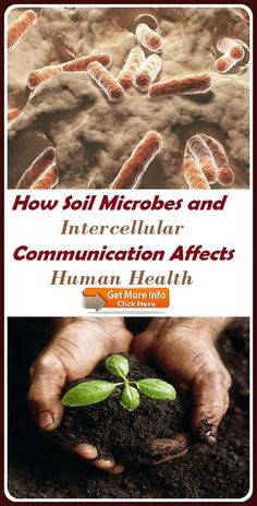 How Soil Microbes and Intercellular Communication Affects Human Health How To Stay Healthy, Communication