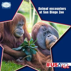 3,700 animals, 100 acres of wildlife habitat to explore, live cameras to watch animals in their natural habitat and animal encounters with everything from elephants and giraffes to pangolins and wolves. Visit the world's  #1 zoo with your kids, on your #USA vacation #SummerVacation