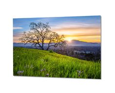 The San Francisco East Bay Area is filled with beautiful rolling hills and wonderful oak trees. This metal print of a sunrise over Mount Diablo was photographed during a beautiful spring morning and would add serenity to almost any room in your home or business.  Title: Mount Diablo and East Bay Hills Sunrise  ~ This limited edition photo will be infused directly into the surface of an aluminum sheet with high quality dyes. ~ Because the image is infused into the surface and not on it, your…