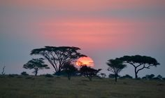 Sunset From Africa with Love