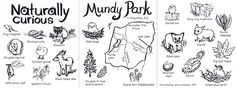 """Naturally Curious Mundy Park"" by Lena Umezawa.  April 2014. This was also originally a submission to the ""curious & creative"" illustrated map contest sponsored by Uppercase magazine and TheyDrawAndTravel.  The first version is this one.  The second version, here, was rearranged to be a trifold field guide map (thanks for the feedback, Nate and Salli!).  Also, I swapped out the font (version one uses Courier New, which I like because I'm lucky/old enough to have learned ..."