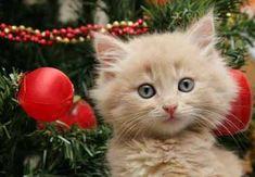 Cute+Christmas+Kittens | Cute Christmas Kittens (26 pics)
