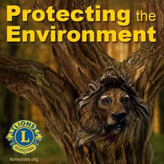 Lions Clubs: Protecting the Environment