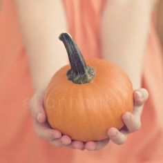 baby pumpkin photograph / thanksgiving, autumn, fall, orange, hands, give, harvest, halloween, pumpkin pie / 8x8 fine art photo