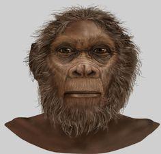 Homo rudolfensis, for Smithsonian National Museum of Natural History: David H. Koch Hall of Human Origins, by Karen Carr and Karen Carr Studio, Inc.