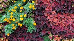 groundcover plants keep your yard cool, thus needing less water