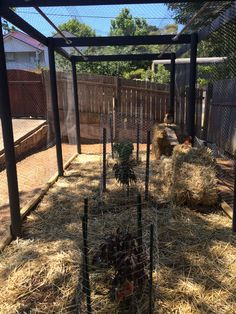 Chicken coop and fully enclosed run. Note the dwarf stone fruit trees. #yandeloracoops