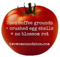 Blossom Rot http://www.calloways.com/would-it-be-beneficial-use-coffee-grounds-and-crushed-eggshells-around-base-various-plants http://www.twowomenandahoe.com/