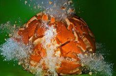 Фотограф Алан Сэйлер (Alan Sailer) взрывает фрукты и овощи и фотографирует этот процесс. Яблоко, сладкий картофель, баклажан и даже сельдерей - все превращается в пюре без помощи блендера!