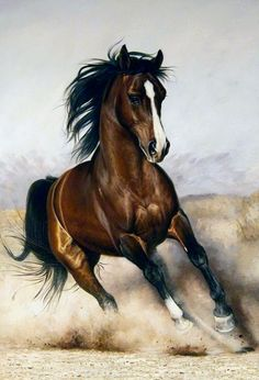 Or I dream il fancies me, though I'm jumping on a quick horse . Discussion on LiveInternet - Russian Service Online diary - Marie Grzymlas - Pferd Cute Horses, Pretty Horses, Horse Love, Beautiful Horses, Animals Beautiful, Horse Pencil Drawing, Horse Drawings, Animal Drawings, Drawing Art