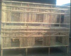 Pengemar ayam Aduan atau ayam bangkok, selain menjaga, merawat dan memelihara ayam bangkok penting juga memiliki kandang ayam aduan. Kandang ayam aduan bisa di buat sendiri bisa juga di buatkan ole…