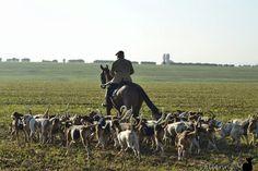 Entrainement des chiens Hounds Training