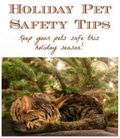 Tips to help keep your pets safe while you celebrate the holiday season!