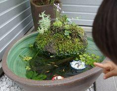 Water Plants Indoor, Indoor Pond, Outdoor Ponds, Mini Plants, Outdoor Landscaping, Indoor Garden, Small Water Gardens, Container Water Gardens, Container Pond