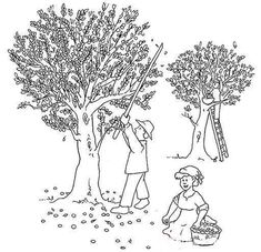 Olive Tree Coloring Page Sketch Coloring Page Tree Coloring Page, Coloring Pages, Olive Tree, Amazing Nature, Handicraft, Childrens Books, Dandelion, Kindergarten, Projects To Try