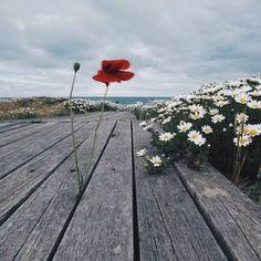 solosepensi:  Un fiore non pensa di competere con il fiore...