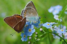 Jak vytvořit ze zahrady kvetoucí ráj: trvalky, letničky i zelenina ...
