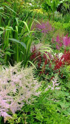 Astilbe in Knockpatrick Gardens Farmhouse Garden, Astilbe, Beautiful Gardens, Irish, Places To Go, Yard, Sign, Flowers, Plants