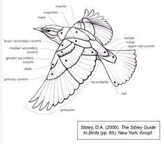 BirdWingDiagram