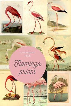 Flamingo Painting, Flamingo Art, Pink Flamingos, Flamingo Bathroom, Birds Of America, Picture Boxes, Bird Book, John James Audubon