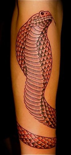 Red King Cobra tattoo by paul taylor