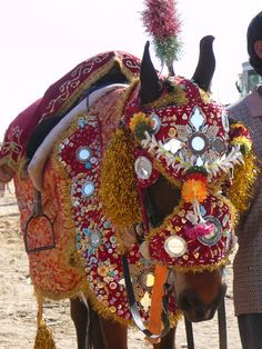 marwari horses in costume | Shadow of Equus: A Bit of a Problem | Horse Journals