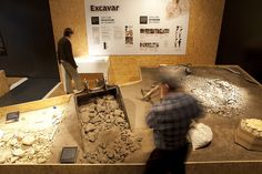 Interactive Paleontology Museum by Marc Ayala, via Behance
