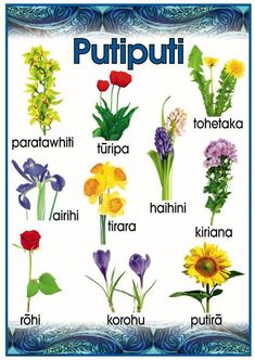 Putiputi - Flowers Promote and encourage Te Reo Maori in your class environment or learning centre with this fabulous vocabulary poster. Hawaiian Tribal Tattoos, Samoan Tribal, Filipino Tribal, Waitangi Day, Maori Words, H2o Mermaids, Dark Spots On Face, Education Templates, Nursery Activities
