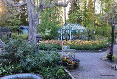 Garden, Plants, Summer, Lifestyle, Garten, Summer Time, Lawn And Garden, Gardens, Plant