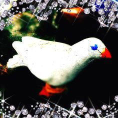 Day 1: peace ~ dove - symbol of peace #photoadayMay #peace #dove